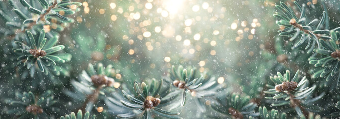 Beautiful green fir tree branches close up. Christmas and winter concept. Soft focus, macro.
