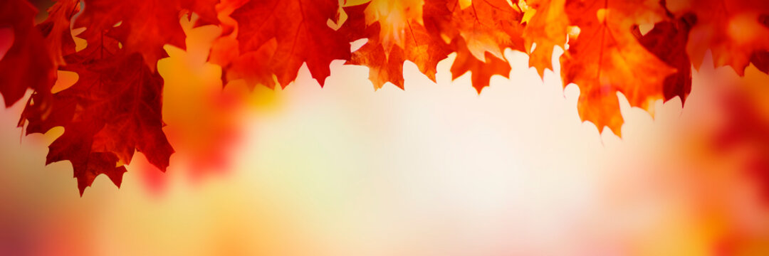 Autumn leaves over golden sunny bokeh background, multi colored leaves sunset copy space, colorful fall backdrop