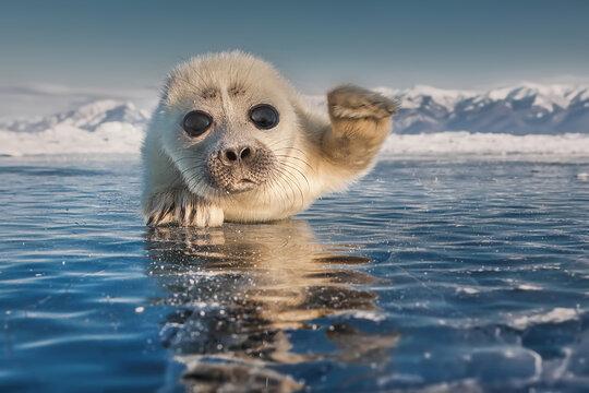 Hello, friends!