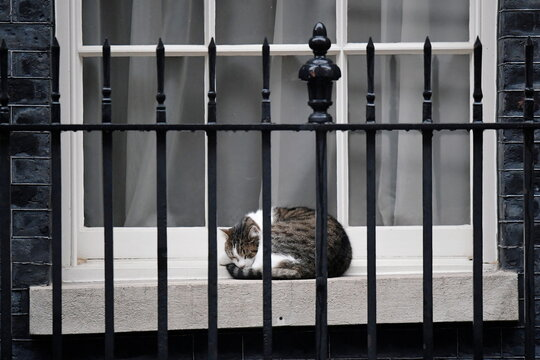 Larry the cat sleeps outside Downing Street in London