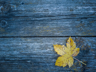 Autumn Again - Coloured maple leaves on a weathered wooden board make a beautful seasonal autumn background.