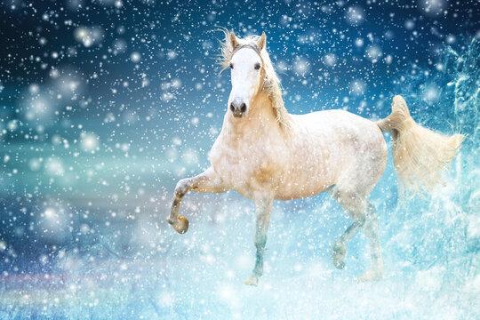Weißes Pferd vor blauem Hintergrund mit Schnee