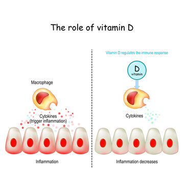 Vitamin D, immune system and COVID-19.
