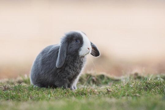 Little decorative fold rabbit outdoors
