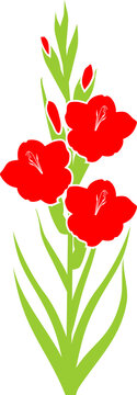 Silhouette of flowering red gladiolus with green leaves