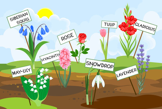 Different species of garden flowers with titles growing from the ground against the background of spring landscape