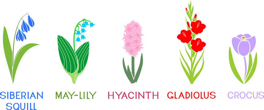Set of different species of garden flowers with titles isolated on white background. Silhouettes of silhouette flowers in flat style