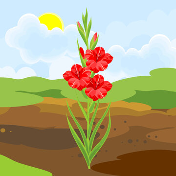 Blooming gladiolus plant with red flowers and green leaves growing from the ground on background of summer landscape