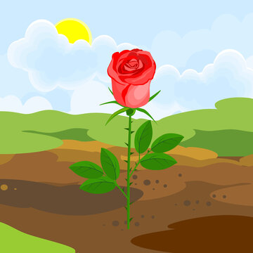 Blooming rose plant with red flower and green leaves growing from the ground on background of summer landscape