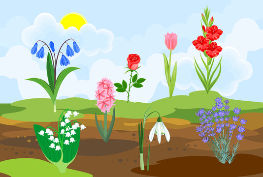Different species of garden flowers growing from the ground against the background of spring landscape