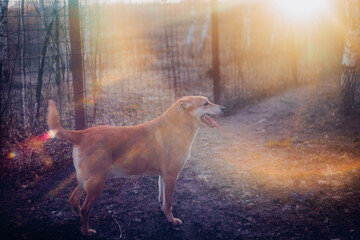 Cheerful ginger dog on a walk in winter