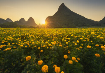 Close-up of sunset scenery in flower field