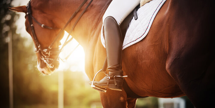 A bay racehorse with a rider in the saddle, who has black boots with spurs, is illuminated by bright rays of sunlight. Horseback riding. Equestrian sport.