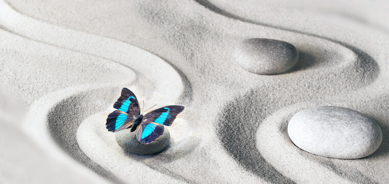 zen garden meditation stone background and butterfly with stones and lines in sand for relaxation balance and harmony