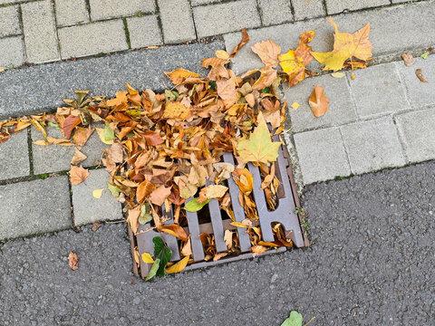 Herbstlaub verstopft einen Gully