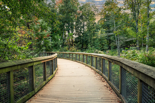 a winding bridge through the forest with wooden and gated railings surrounded by lush green and autumn colored trees at Rhodes Jordan Park At Lawrenceville in Lawrenceville, Georgia