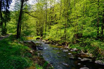 river in a forest in the austrian region mühlviertel near unterweitersdorf