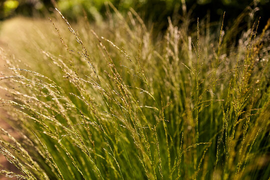 nature and flora concept - sunny summer field with grass or herbs