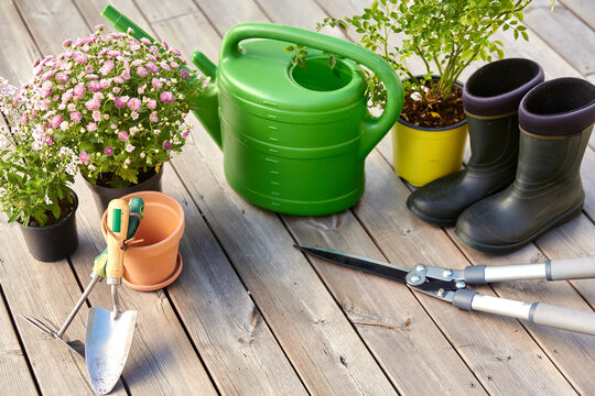 gardening, farming and planting concept - garden tools, flower seedlings and rubber boots on wooden terrace in summer