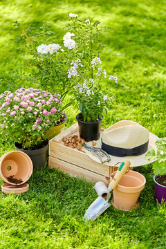 gardening and planting concept - garden tools, wooden box and flowers in pots at summer