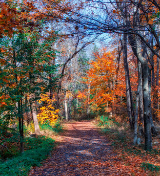 Autumn Colors Along the Walking Path -   The trail in Hemlock Ravine Park is bright with the colors of autumn foliage on an autumn day in late October
