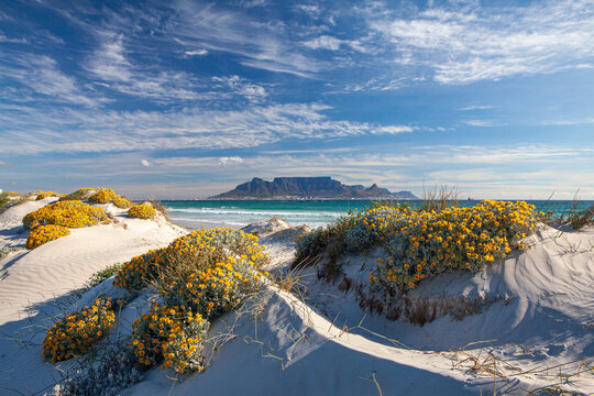 scenic view of table mountain in cape town south africa from blouberg strand with spring flowers