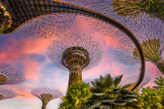 Supertrees in Gardens by the Bay , Singapore