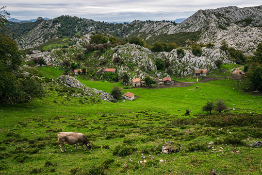 Green landscape of Picos de Europa National Park in Asturias, Spain. Green meadows and small cottages in Picos de Europa National Park in Asturias, Spain around sunset.