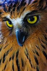 close up of an eye of an owl