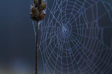 pajęczyna jesień natura przyroda park