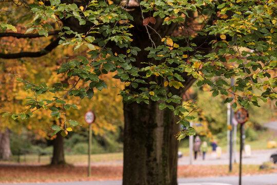 Autumn colours in bristol clifton down