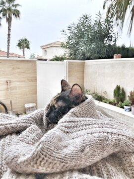 Black tricolor Cat sleeping covered warm knitted sweater outsider terrace on rainy day