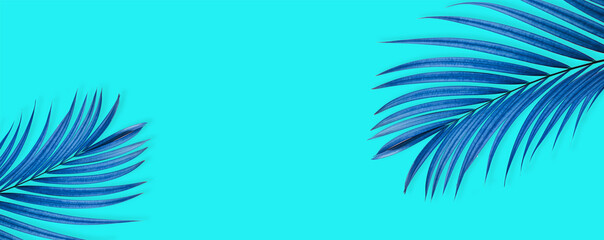 top view of tropical palm leaf on blue color background. minimal summer concept. flat lay