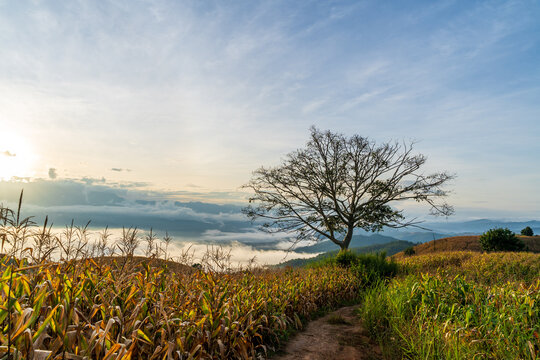 Natural Landscape Scenery View of Countryside and Corn Terrace Farming in The Foggy Sunrise.
