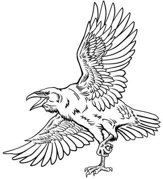 A raven in flight. Flying large bird. Hand drawn crow. Outline tattoo style vector illustration