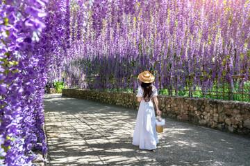 Wall Mural - Beautiful girl walking at purple flower tunnel in Chiang Rai, Thailand.