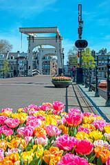 Tiny bridge in Amsterdam the Netherlands in springtime
