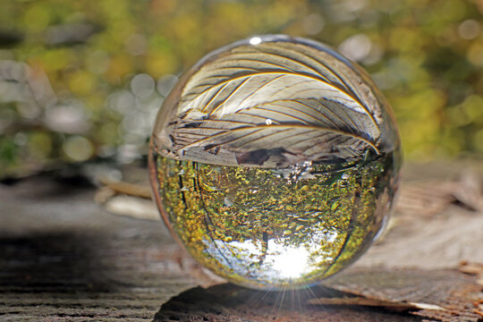 wald in kristallkugel, schweiz