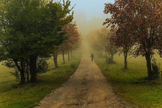 man walking on misty autumn alley