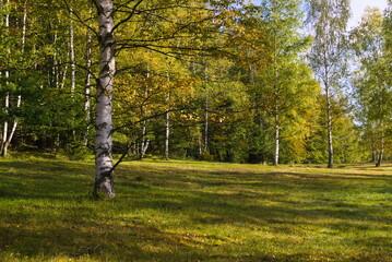 Jesienny las w Karkonoszach/Sudetach.