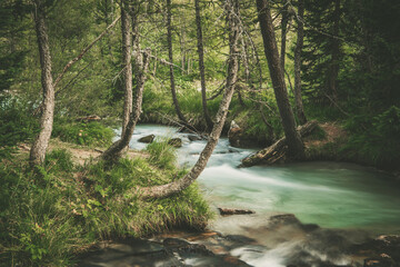 Scenic Forest River