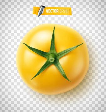 Tomate vectorielle sur fond transparent