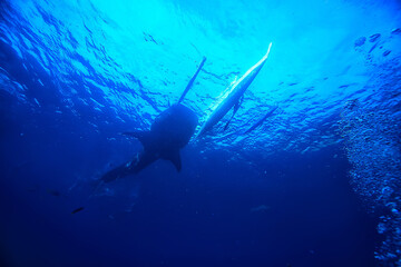 whale shark scene landscape / abstract underwater big sea fish, adventure, diving, snorkeling