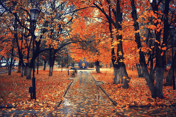 autumn season landscape in park, view of yellow trees alley background
