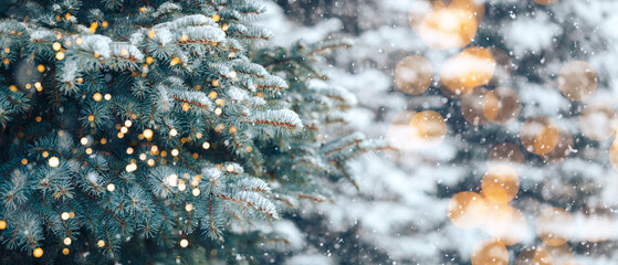 Christmas tree without decorations outdoor in park with bokeh, beautiful blue spruce snow fall