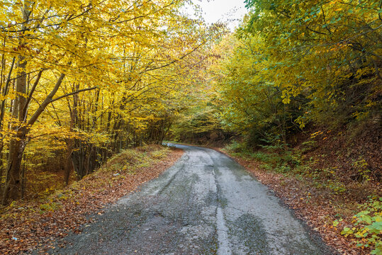 asphalt road with beautiful trees on the sides in autumn.