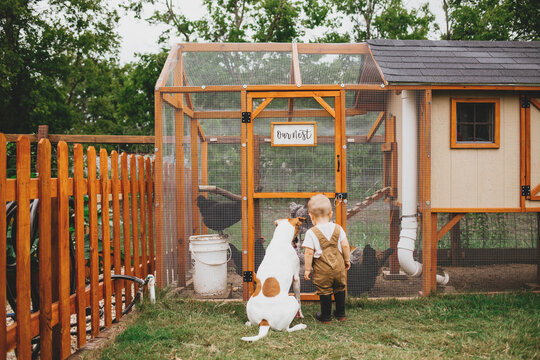 Toddler and Dog Looking at Backyard Chicken Coop