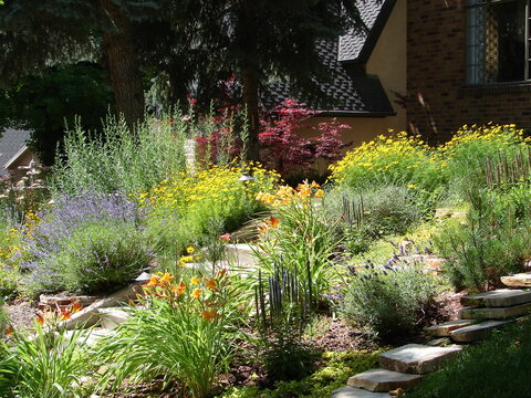 xeriscape garden with blue, yellow, red and orange flowers