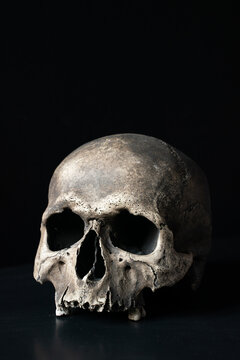 Human skull on black background with space for text