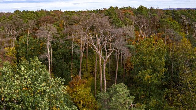 Luftbild von kranken Bäumen in einem Mischwald im herbstlichen Deutschland verursacht durch den Klimawandel